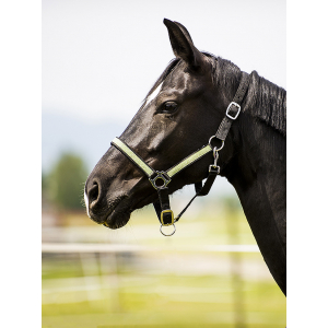 Norton Paillette headcollar