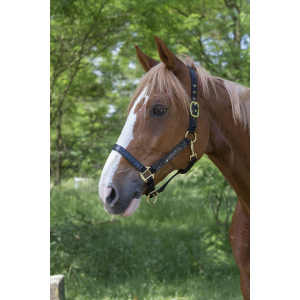 Croco nylon headcollar
