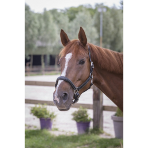 Norton Fancy lined headcollar