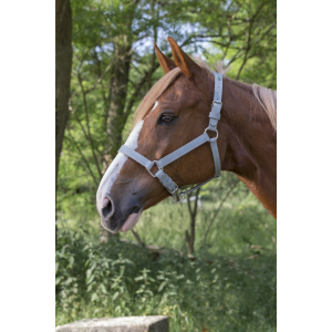 Norton  Chrome Headcollar
