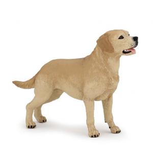 Labrador Papo