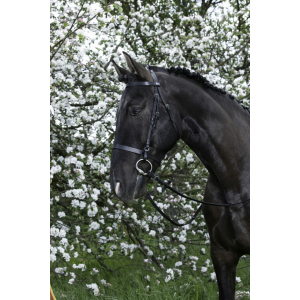 Bridon Riding World...