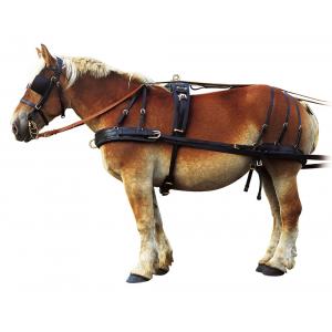NORTON Draught horse harness