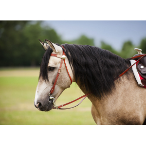 "COLORADO SPRINGS ""Two Tone"" bridle"