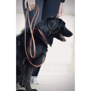 Leash Pénélope Point Sellier for dog