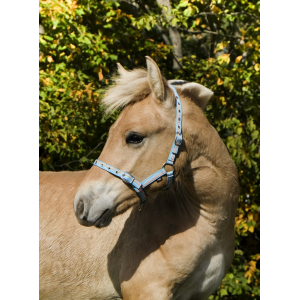 Norton Foal nylon headcollar