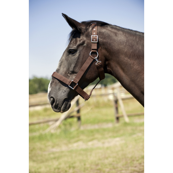 Licol nylon cheval de trait Norton