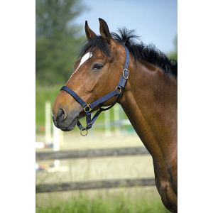 Licol nylon cheval de trait