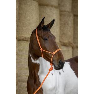 Norton Fluo Ethological Halter + Lead Rope