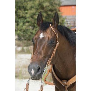 Westride 1 ear hazelnut Bridle by Franck Perret PADD