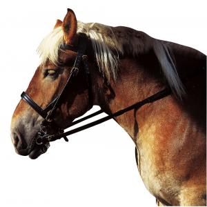 Cortina Hoofdstel voor trekpaard