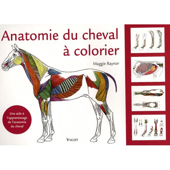 Anatomie du cheval à colorier